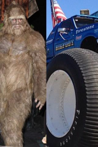 Comparison of the World's Most Elusive Creature