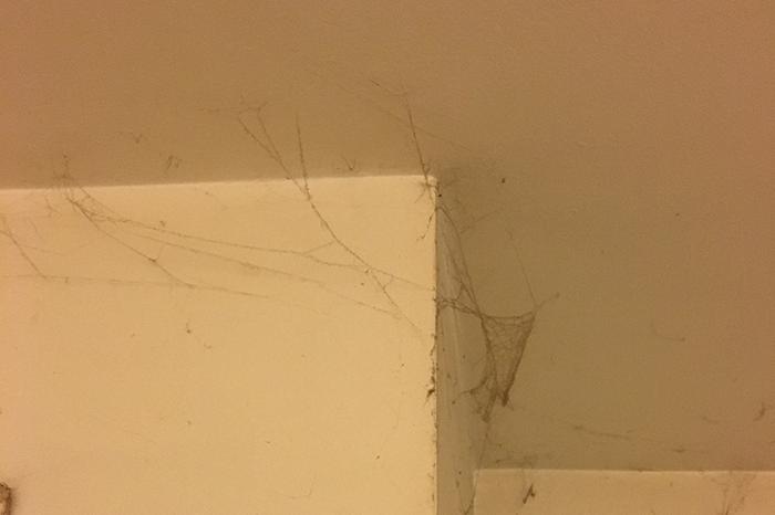 Bigfoot's Web-Covered Bedroom